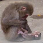 Spass Tattoos neben den Affen
